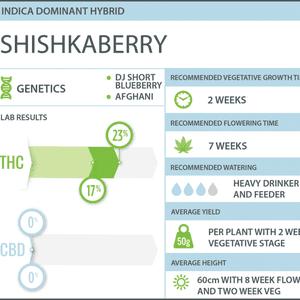 WeedMD   Shishkaberry Clone
