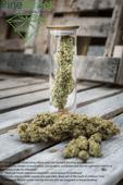 Pine Street Cannabis Company