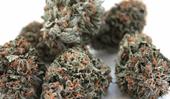 LA Cannabis Co - Los Angeles