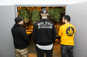 BCC Collective