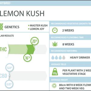 WeedMD   Lemon Kush Clone