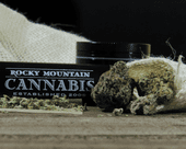 Rocky Mountain Cannabis - Dinosaur