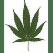 Best Stuff On Earth Cannabis Dispensary in Riverside