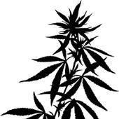 Rocky Mountain Cannabis - Ridgway Cannabis Dispensary in Ridgway