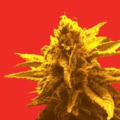 Logo for Superb Herb Company