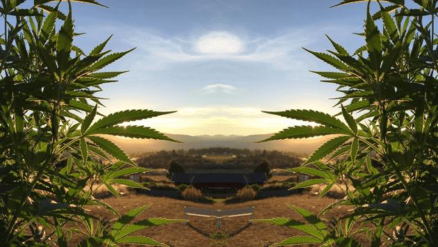 Oasis Cannabis - Newberg