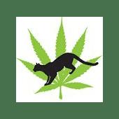 Cougar Cannabis Cannabis Dispensary in Roseburg