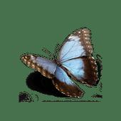 Logo for Arizona Natural Selections of Peoria