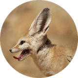 ElliesBlues