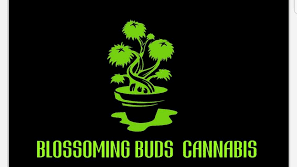 Blossoming Buds Cannabis
