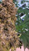 Arctic Herbery