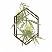 Logo for The Botanist - Farmingdale
