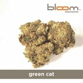 Bloom Phoenix