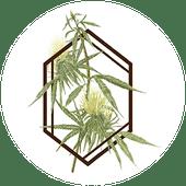 Logo for The Botanist - Worcester