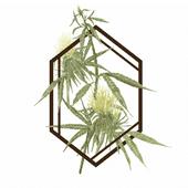 Logo for The Botanist - Buffalo